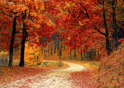 autumn-colorful-colourful-33109